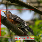 Picture of bird recognised and labelled by computer